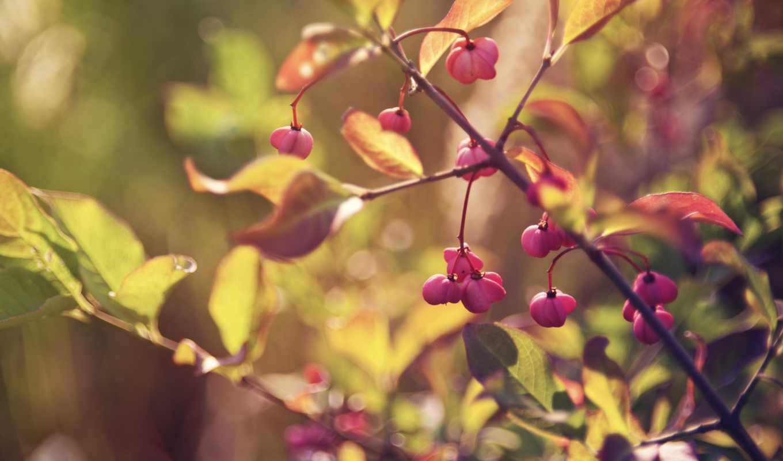 листья, блики, ветка, ветки, ветви, листва, свет, макро, ягоды, лист, размытость, осень,