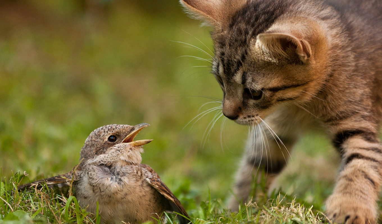 кошка, kot, охота, птица, котенок, priroda,
