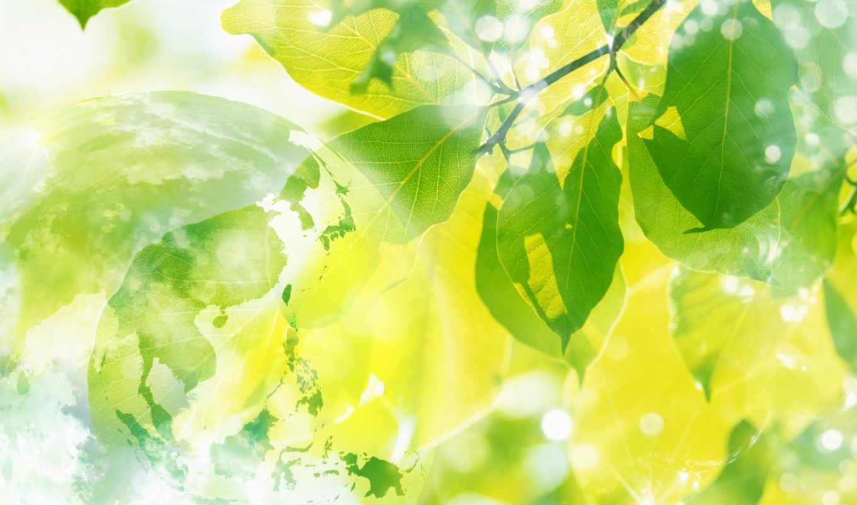 весна, sun, природа, листва, февр, солнца, martha, вечер, небо,
