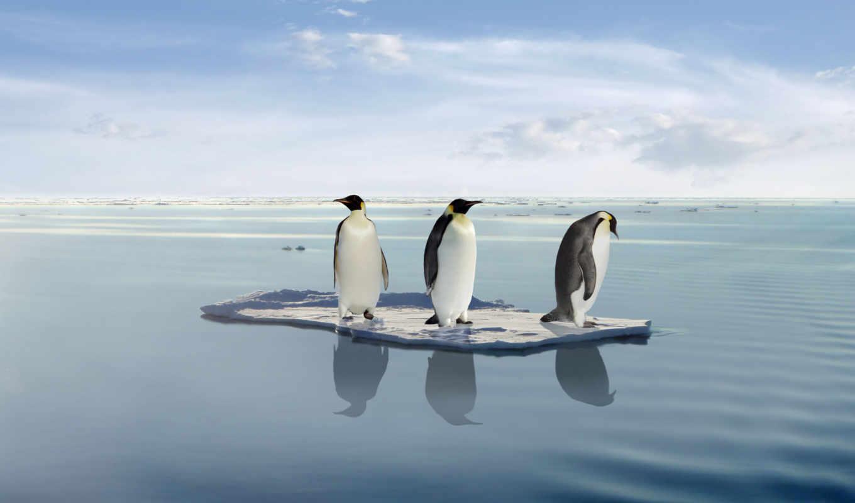 global, warming, penguins, пингвин, stock, три, melting, лед,