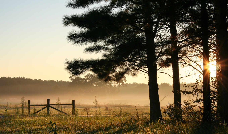 лес, рассвет, небо, oir, туман, дерево