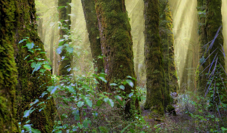 лес, стволы, показывать, эротику, природа, мох,