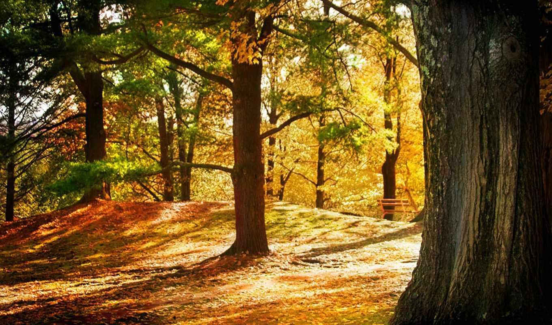 community, осень, прочитать, обойки, целикомв, цитата, сообщения, цитатник, sozh,