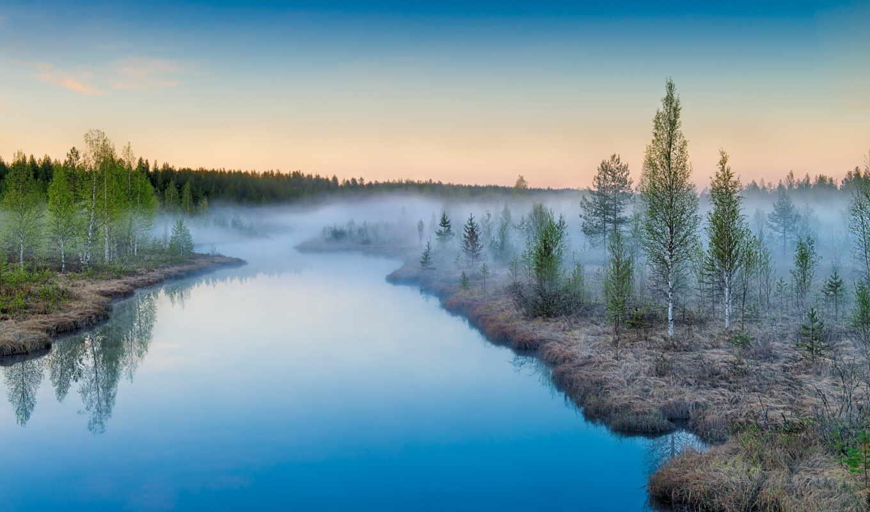 suomi, reki, деревя, красивые, березы, природа, леса, природы, нояб,