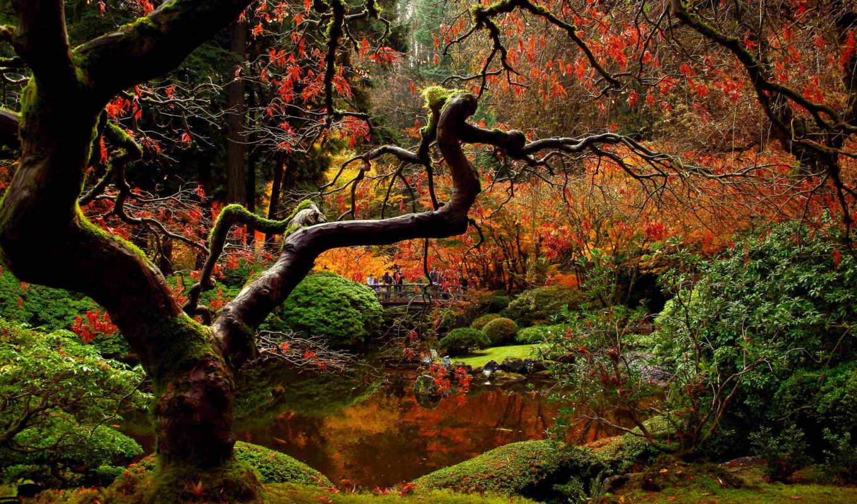 garden, japanese, осень, мост, люди, park, природа,