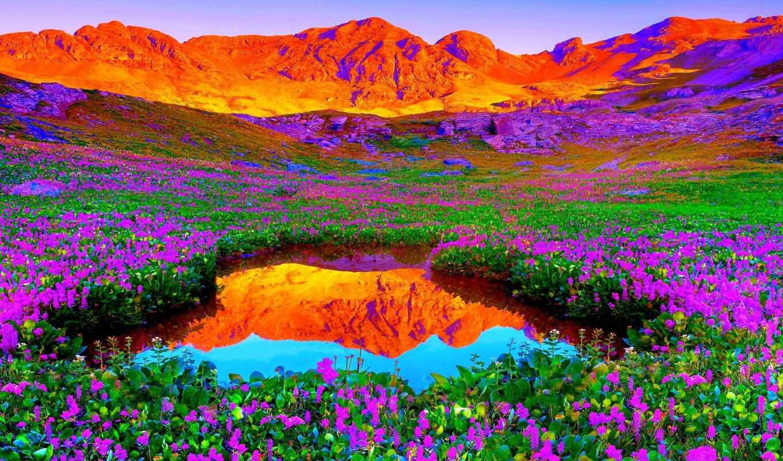 цветы, гора