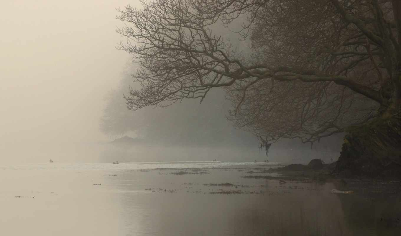 туман, река, дерево, берег, ветви,