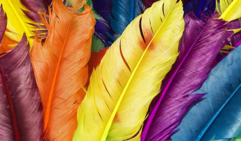 перья, птицы, перышки, разноцветные, iphone,