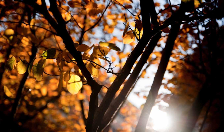 makro, листья, дерево,
