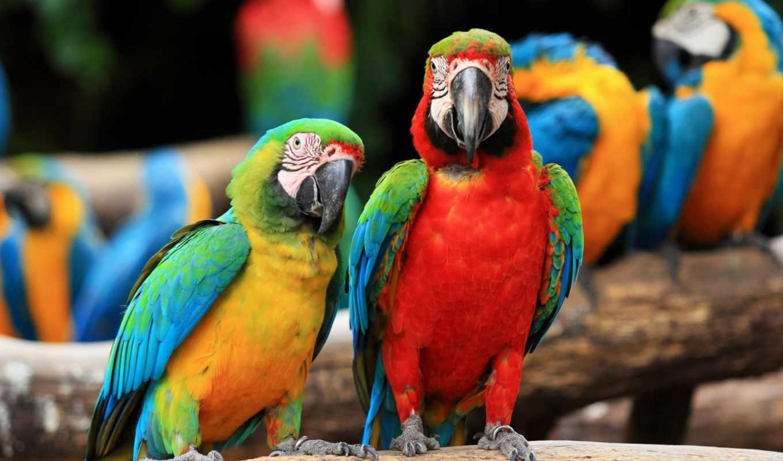 macaw, пара, ara, ararauna, scarlet, macaws, попугаи, попугай, stock, images,