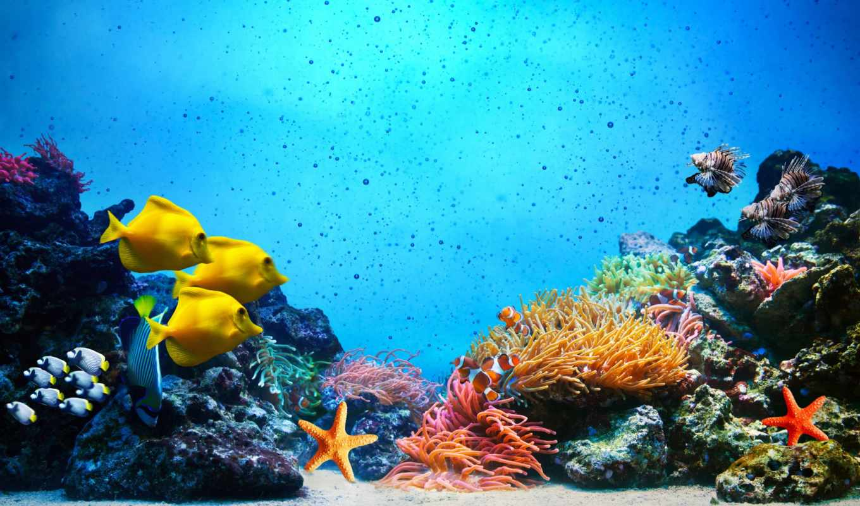 underwater, marin, sous, ecran, fonds, sur, fond, animaux, ocean, monde,