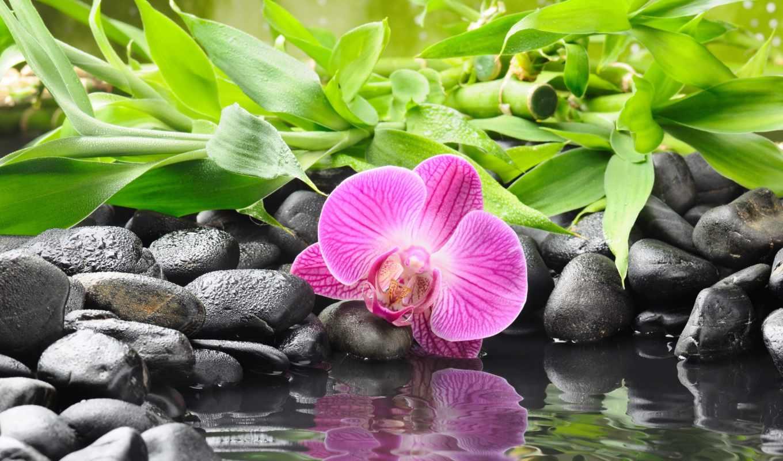 орхидея, камни, цветок, черные, вода, фото,