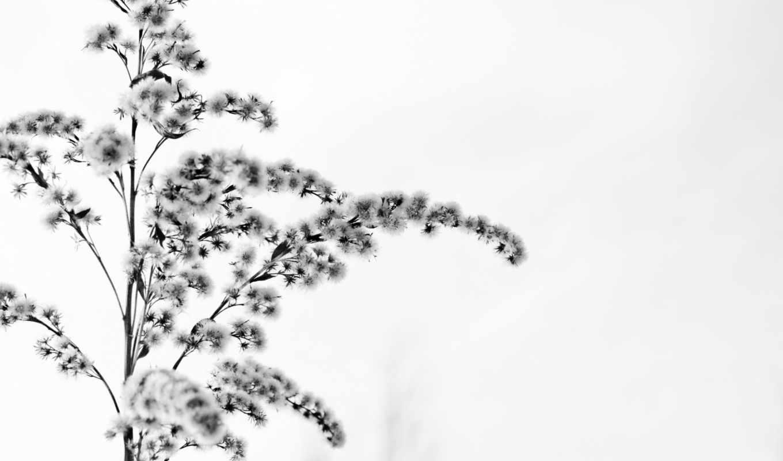 цветок, зима, снег, белое, картинка,