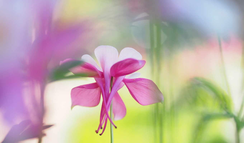 cvety, обоях, nazad, добавлено, цветок, god,