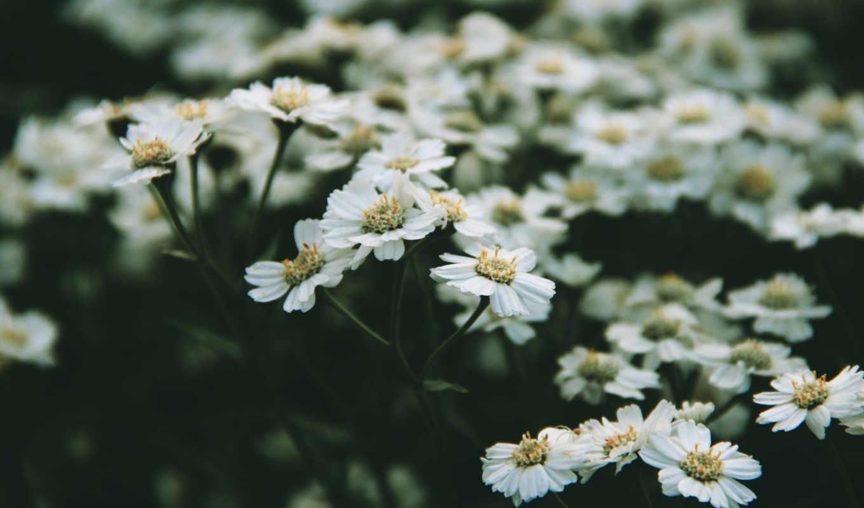 нежность, цветочки, утро, девушка,