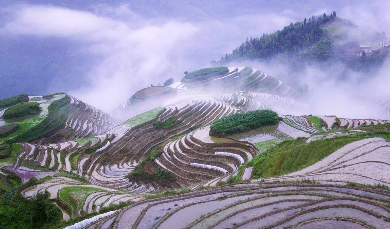 mist, rice, morning, early, china, guangxi, province, desktop, images, stock, nature, photo, online, inch, slike, image,
