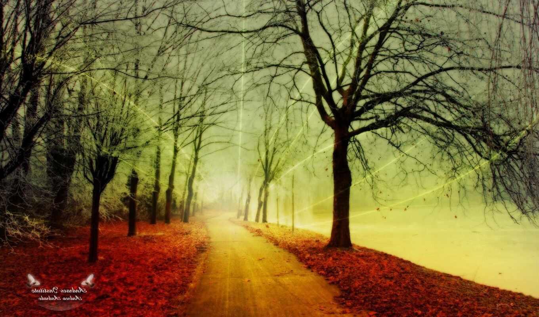 park, autumn, wallpaper,