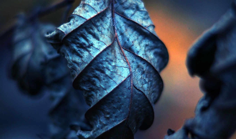 макро, украшения, фотографии, фона, прожилки, сухие, листья, beauty, leaf, nature, تويتر, twitter,