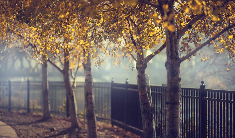 осень, забор, деревья, широкоформатные, березки