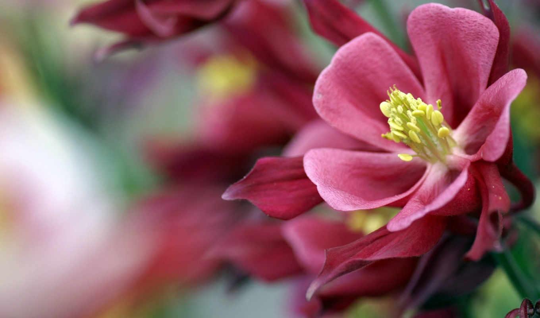 цветы, красивые, красивых, очень, марта, девушек,