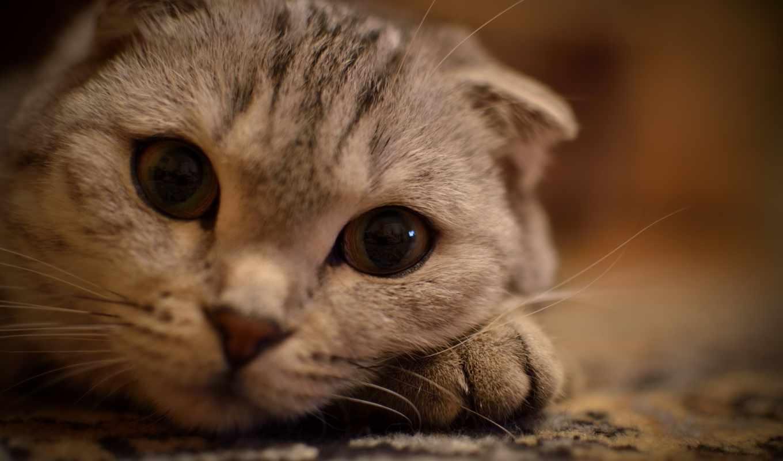 взгляд, кошка, усы, лежит, животные, глаза, лапке, часть, широкоформатные, кошки,