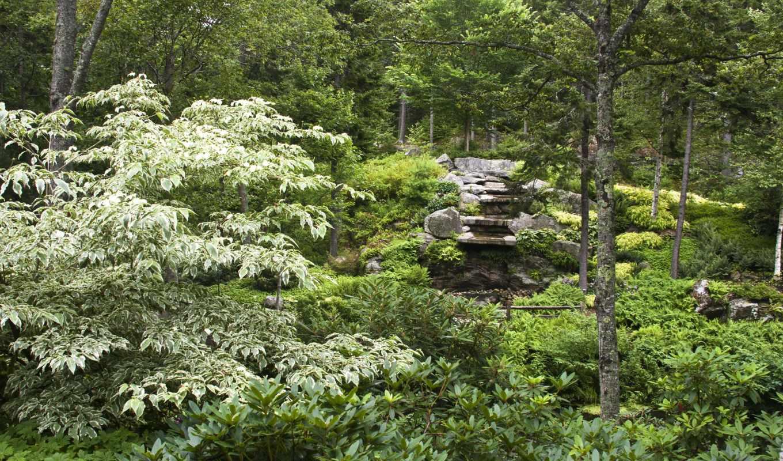 природа, лес, картинка, trees, горы, entertainment,