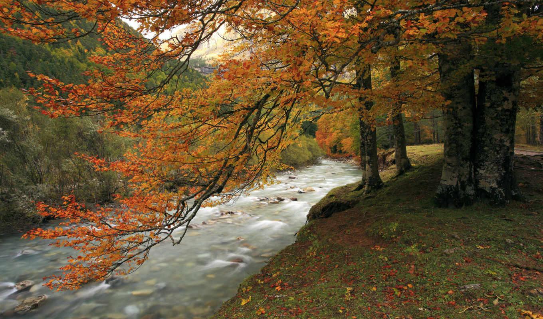 дек, дерево, река, осень, пасть,
