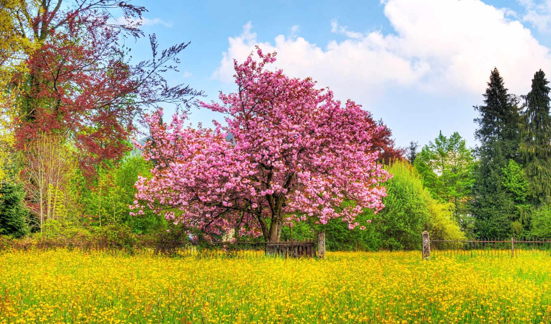 весна, природа, цветущая, весной,