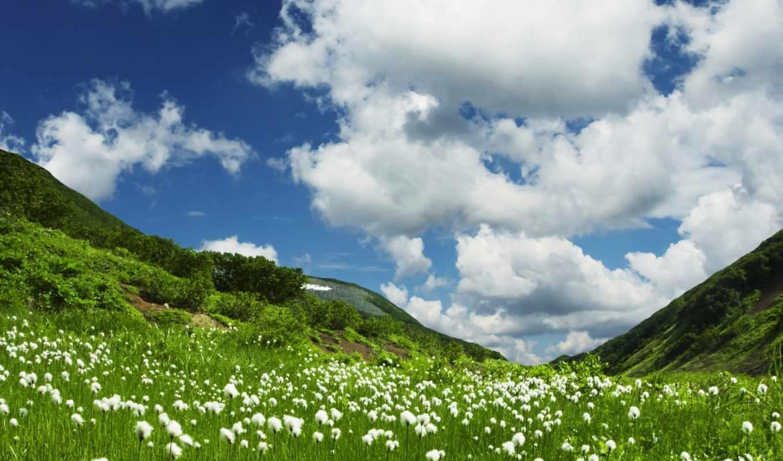 grassland, summer, stock, фотообои, обои, mountain