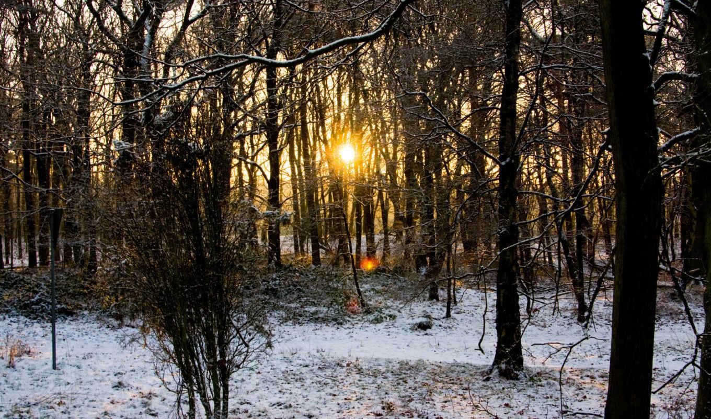nature, предыдущая, you, картинка, солнце, vacation, free, следующая, лесу, осенне, лес, зимний, desktop,