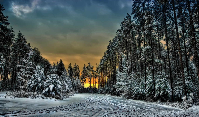 les, онтарио, zima, значок, kartinka, снег, kanada, деревя, zakat, следы,