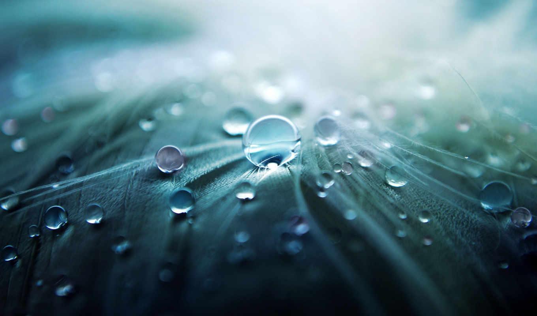 капли, makro, voda, priroda, категория, совершенно,