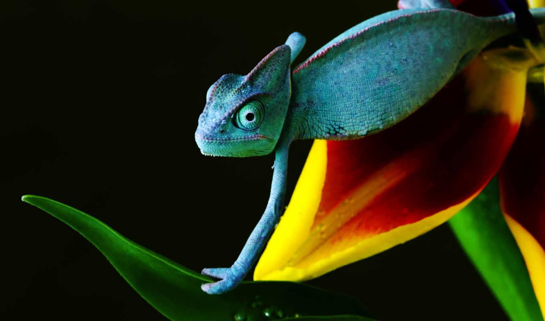 ящер, yellow, red, black, зелёный, chameleon, цветы, кофта,