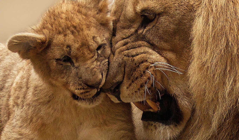 park, jungle, free, биг, stock, lion, national, las, фото, африка,