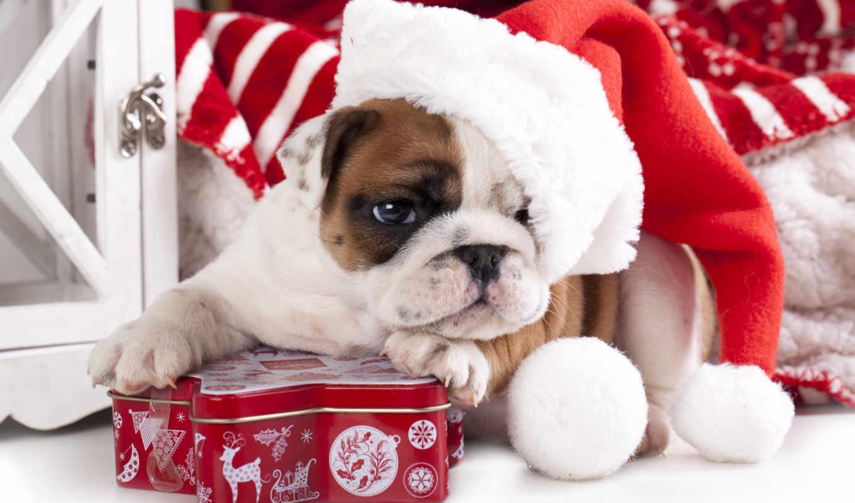 chien, serviette, noël, pour, serviettes, sur, noel, bonnet, ecran, fond,