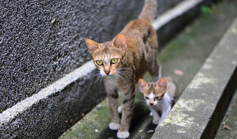 кошки, кот, kitty,