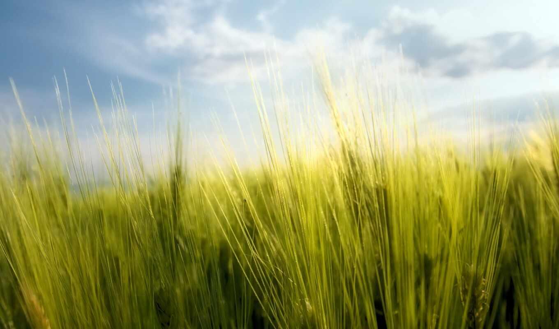 поле, природа, небо, зелёный, лучик, заказать, rye, free, солнечный, луг, house