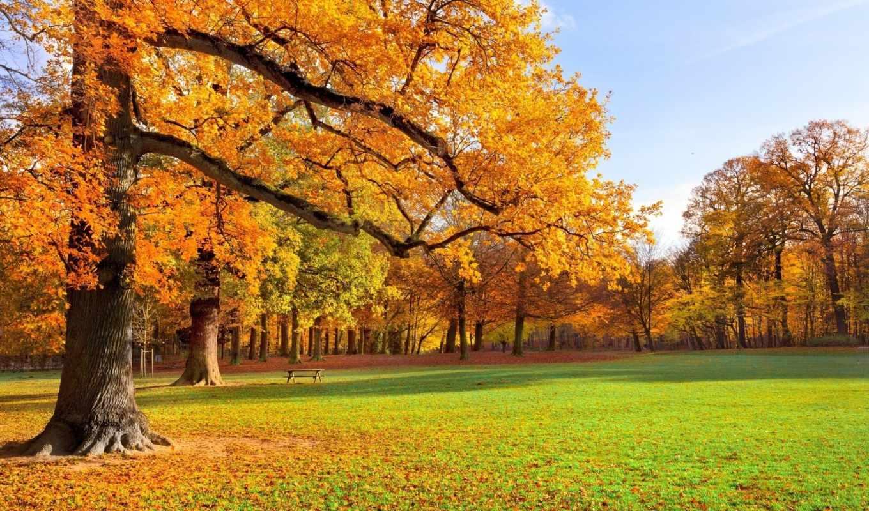 priroda, пейзаж, трава, osen, деревя, листья, park,