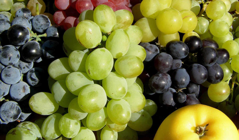 виноград, еда, плод, mobile, телефон, smartphone, useful