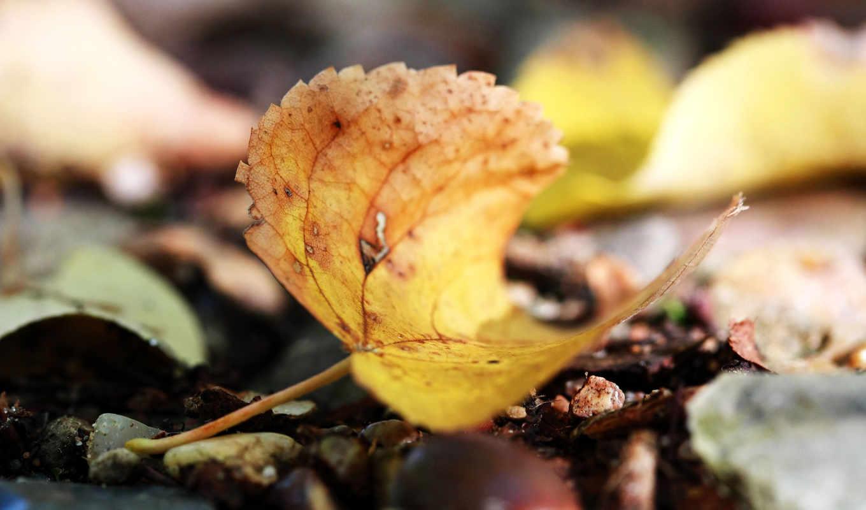autumn, листок, земля,
