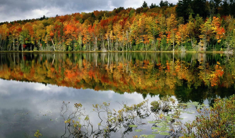 осень, лес, лесу, пруд, деревья,
