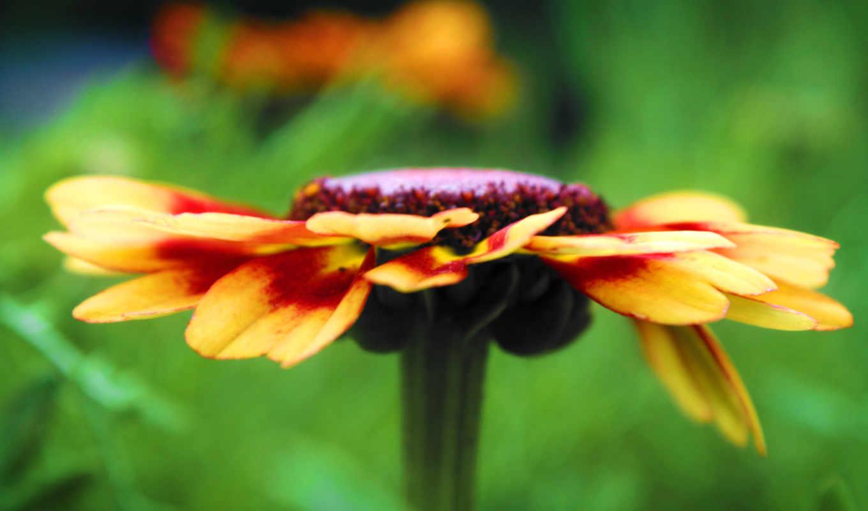 цветы, views, uhd, detail, flowers, widescreen, title,