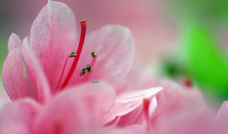 широкоформатные, красивые, бесплатные, весна, guide, национальное,