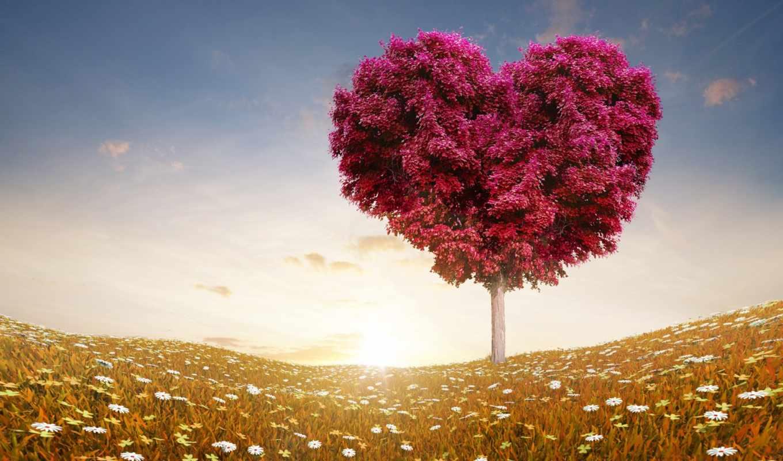 prophet, сердце, ему, жены, world, любви, когда