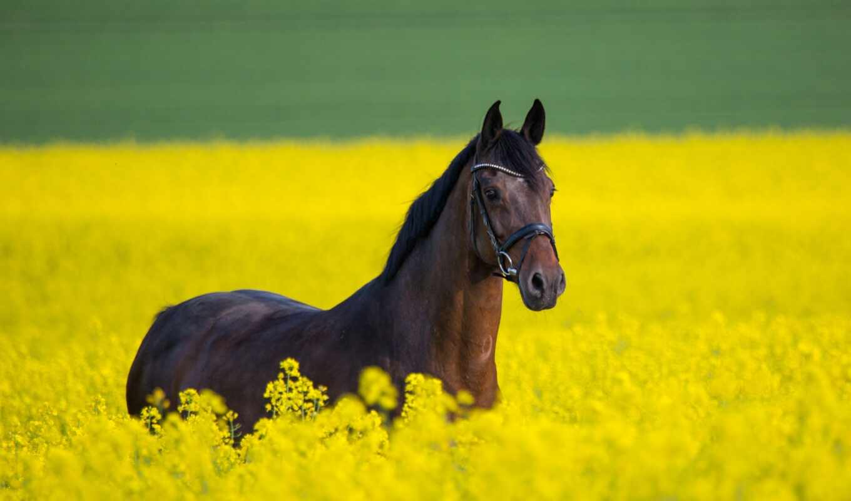 лошадь, дерево, heal, цветы, поле, фото, archive, content, фон, jansson