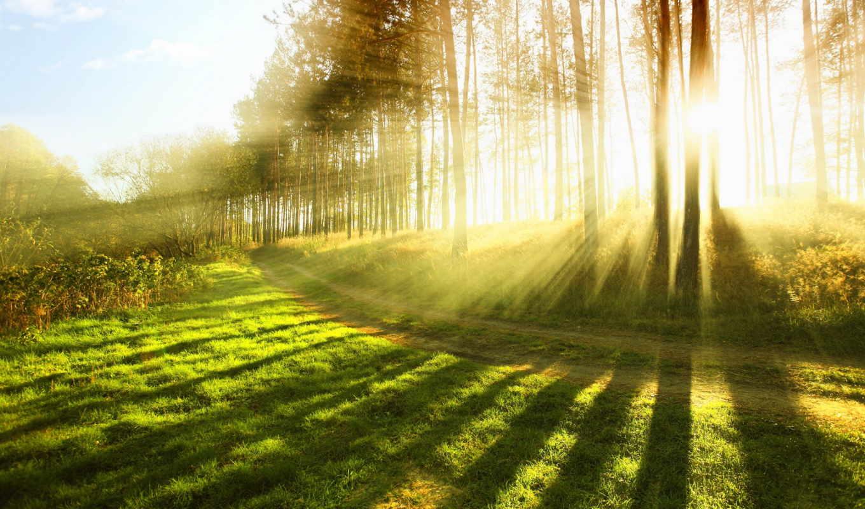 природа, sun, свет, трава, лучи, деревья, лес, дерево,
