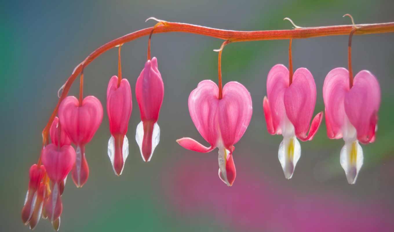 подборка, девушек, красивых, цветы, мб, ecran, марта, fonds, июня, this, fleurs,