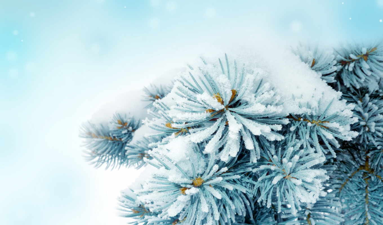 winter, снег, ветки, голки, снегу,