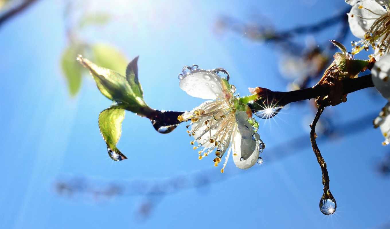 весна, дерево, branch, небо, природа, почки, blue,