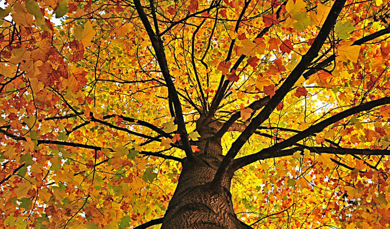 природа, дерево, листва, осень, фотообои, hello, yellow, производить, под,
